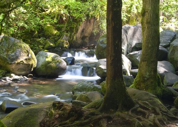 Stream between falls Multnomah Falls area